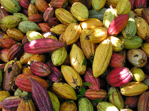 cacao_beans1