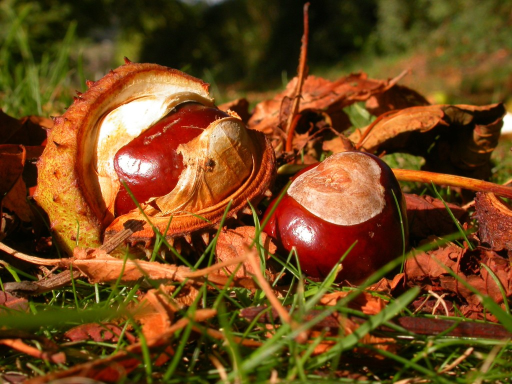 conkers_by_margaret_barton