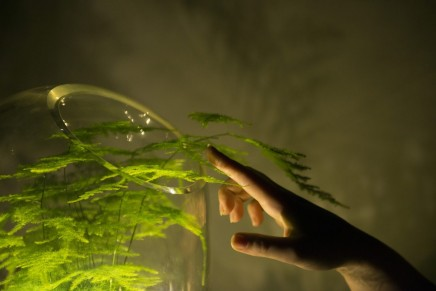 Living Light – an off-grid lamp powered by photosynthesis