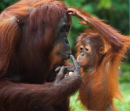 Put An End To Palm Oil