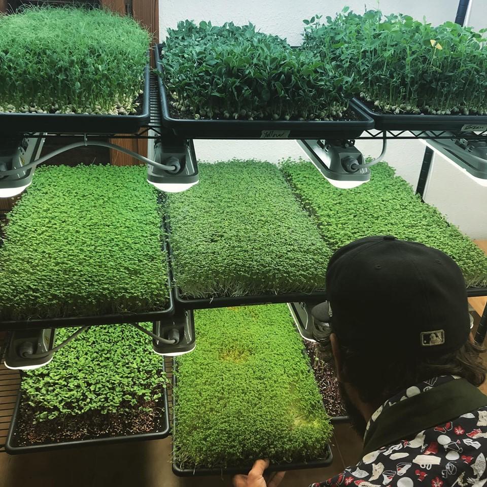 Ibiza Microgreens - vertical farming