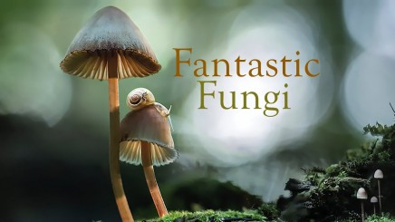 Watch: Fantastic Fungi