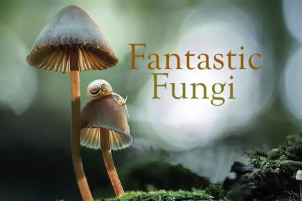 Watch: Fantastic Fungi